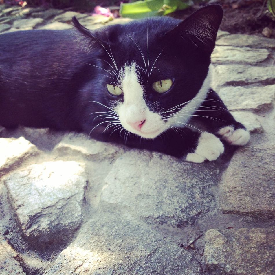 Hello World Taking Photos Cat Lovers Cat