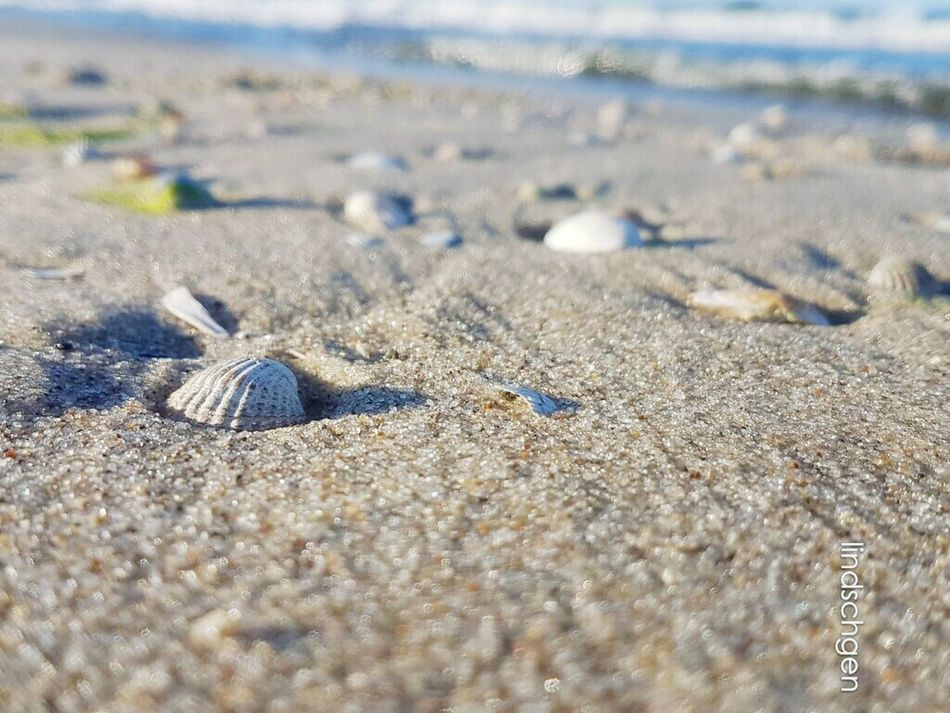 Strandschönheit Muscheln 🐚🌊 Beach Sand Nature Sea Beauty In Nature Sonne, Strand Und Meer Shells🐚 EyeEm Best Shots Urlaub Muscheln EyeEm Best Shots - Nature Glücklich SteinBaltic Sea Ostsee EeYem Best Shots EyeEm Nature Lover Nature Day Steine Und Meer Nature In Beauty Strand Sand & Sea