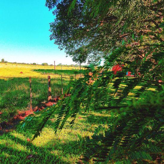 Sitio Avare SP BRASIL ☀️ 🐎 🇧🇷 EyeEm Gallery Sunset #sun #clouds #skylovers #sky #nature #beautifulinnature #naturalbeauty #photography #landscape Usa #igersusa #ig_unitedstates #rockin_shotz #just_unitedstates #insta_crew #gf_usa #nature #rsa_rural #instagramhub #allshots_#world_shooters #insta_america #ig_captures #centralfeed #webstagram #ic_landscapes #wonderful_america #storyofamerica #instagra EyeEmBestEdits EyeEm HDR EyeEmBestPics EyeEm Best Shots Avare Heaven Check This Out