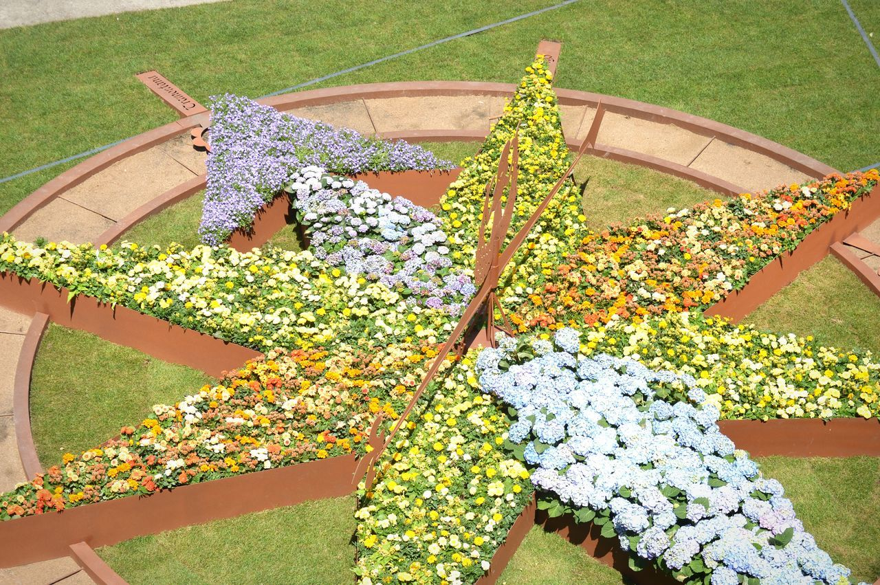 High Angle View Day Outdoors Grass No People Flower Garden Grass Plant Multicolor