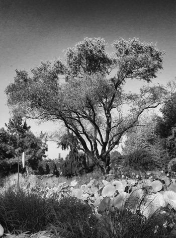 Beauty In Nature Blackandwhite Branch Day Flower Grass Growth Landscape Leaf May Nature No People Outdoors Plant Scenics Sky Thelionking Today's Hot Look Tranquility Tree