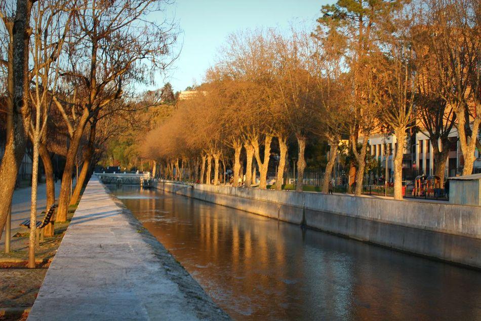 Tree Water Reflection Architecture Built Structure Outdoors No People Nature Day Sky Leiria Leiria Leiria Portugal