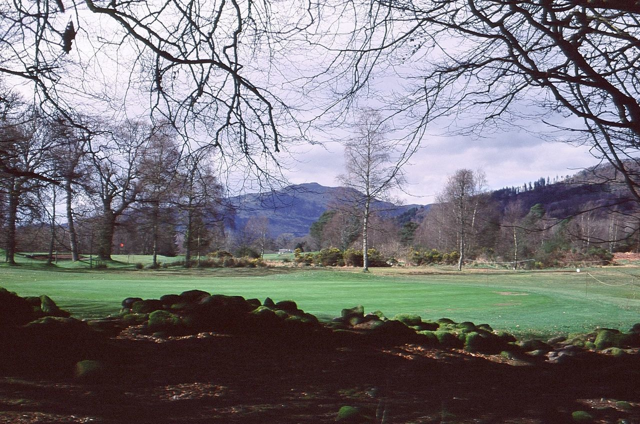 tree, bare tree, golf, beauty in nature, nature, branch, golf course, tranquility, grass, scenics, landscape, green color, day, sport, no people, growth, outdoors, sky, green - golf course