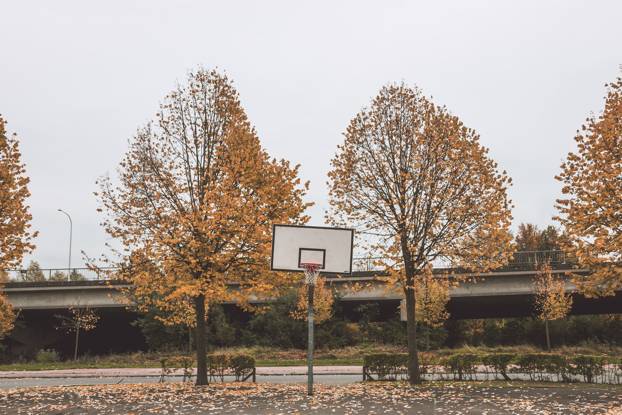 Autumn Basketball - Sport Basketball Hoop Close-up Day Fall Nature No People Outdoors Sky Slanted Tree