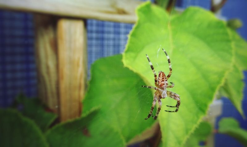 Spider in the garden... Check This Out Taking Photos Enjoying Life Spider Animal Photography Sony Dsc Hx60v Photo♡ In De Buurt Close-up Macro_collection Macro_collection Nature_collection EyeEm Best Shots EyeEm Nature Lover