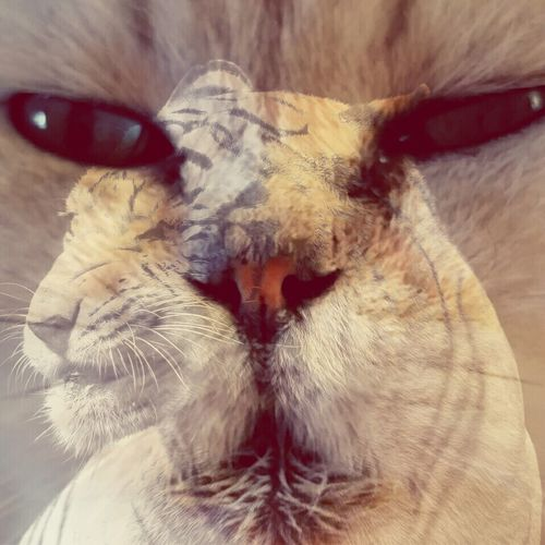 Freddie Taking Photos Different Perspective My Cat The Animal Within Totem Spiritcat