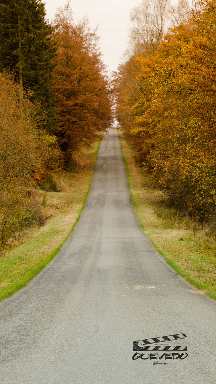 road, the way forward, autumn, tree, diminishing perspective, day, outdoors, asphalt, no people, green color, transportation, nature, scenics, single lane road, grass