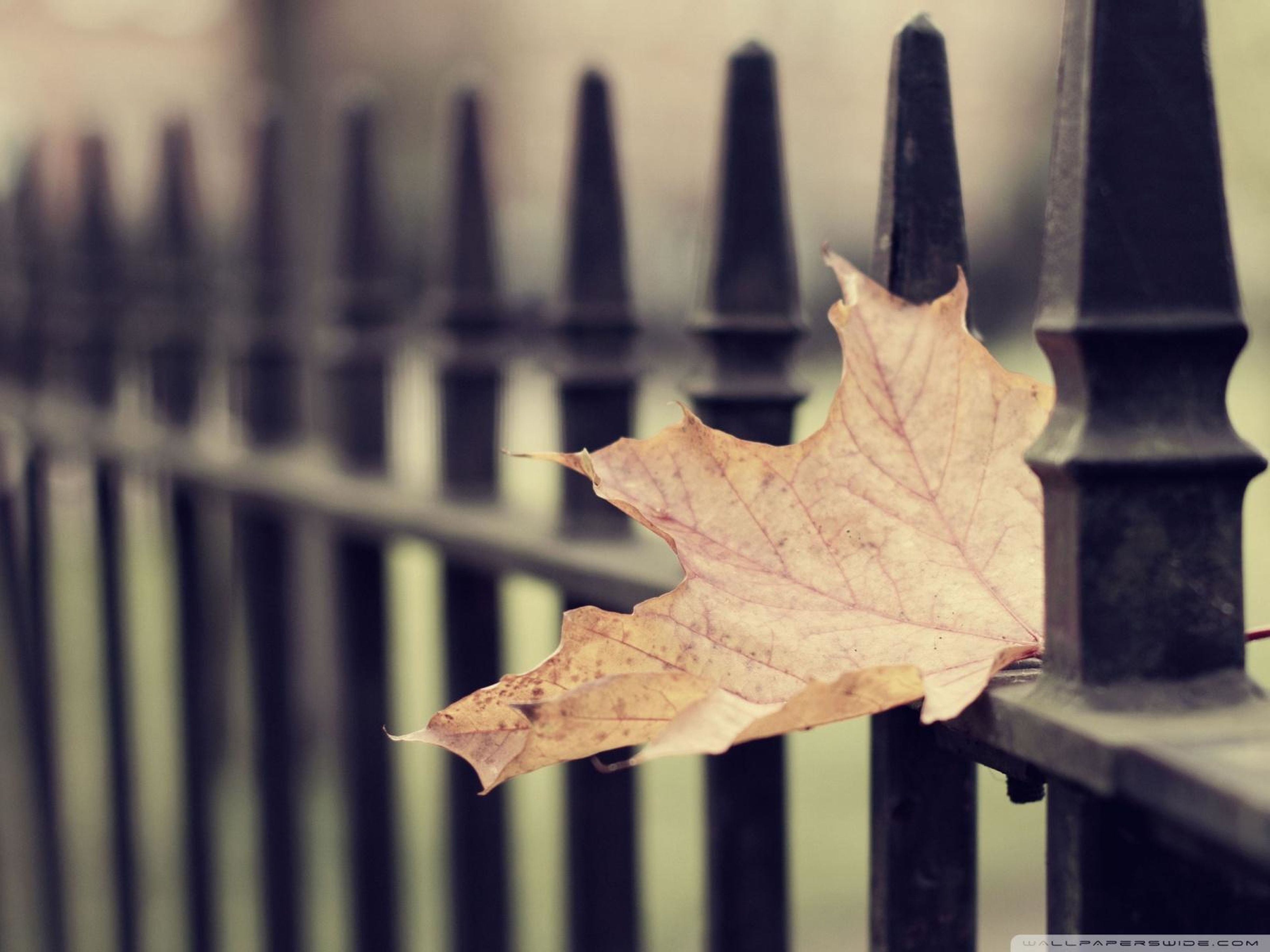 focus on foreground, close-up, wood - material, metal, fence, selective focus, wooden, protection, season, metallic, day, outdoors, railing, wood, in a row, no people, pattern, autumn, safety, leaf