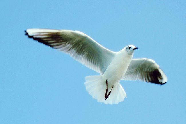 Sea bird Seabirds Birds Sea Sky Bluesky Airlift Fly Flying In The Sky EmeEmPhoto