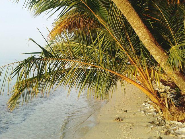 Vilamenhoo Island, Maldives Natural Beauty! Tropical Paradise Sunset Beautiful Surroundings Palm Trees Tropical Plants