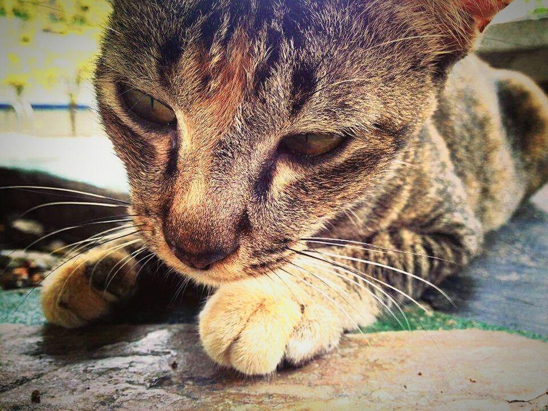 cat🐱 Animal Animal_collection Cat♡ Cats 🐱 Animal Photography Animals Beauty Cat Pets Petslife Cat Mew