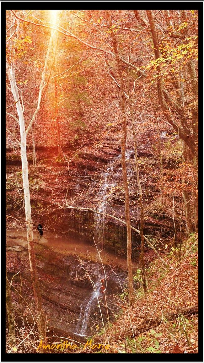 Natures Beauty Waterfall Trees Tn Woods Trail Water Hike Outdoors Sunlight Orange Color