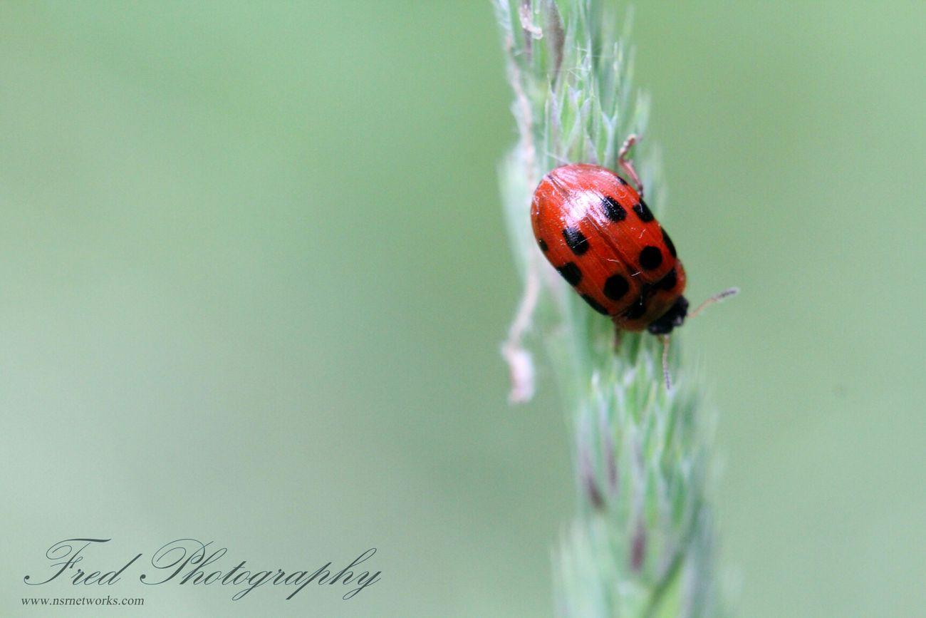 Macro Week Nature_collection Macro Bugs