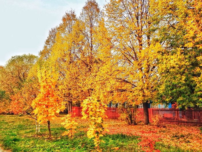 ???? Russia Nature_collection Romantic Autumn