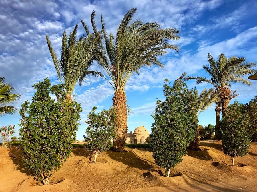 El Gouna El Guna El-Gouna El-Guna Egypt Ägypten  Palm Tree Palme Steigenberger Hotel Red Sea Rotes Meer © MJ ® Tree Cloud - Sky Growth Sky Nature No People Scenics Plant Beauty In Nature Day Tranquility Outdoors Tranquil Scene Tree Trunk Arid Climate Green Color Cactus Architecture