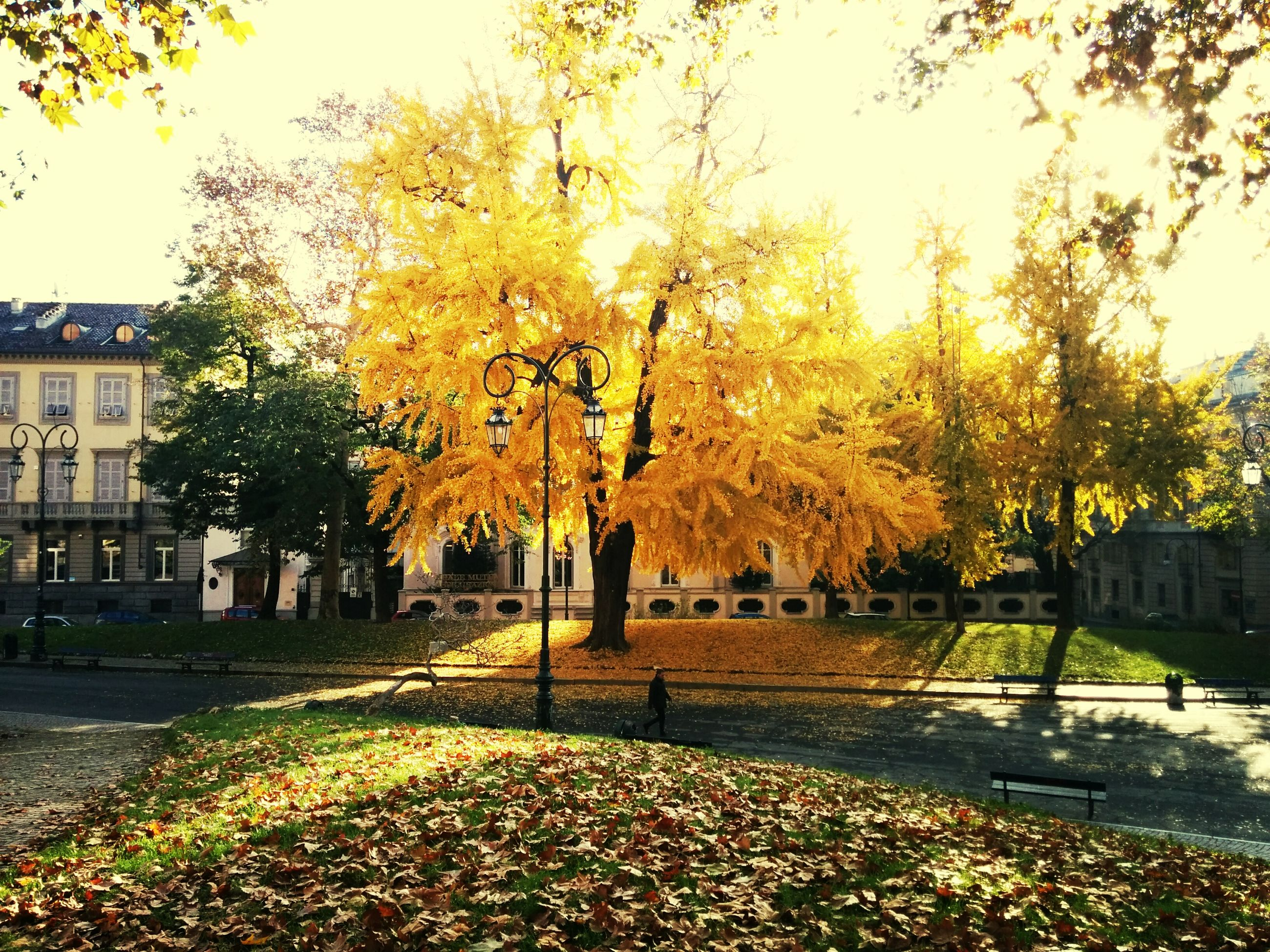 tree, autumn, change, season, yellow, built structure, building exterior, architecture, growth, leaf, nature, branch, park - man made space, orange color, tranquility, fallen, beauty in nature, outdoors, street, sunlight