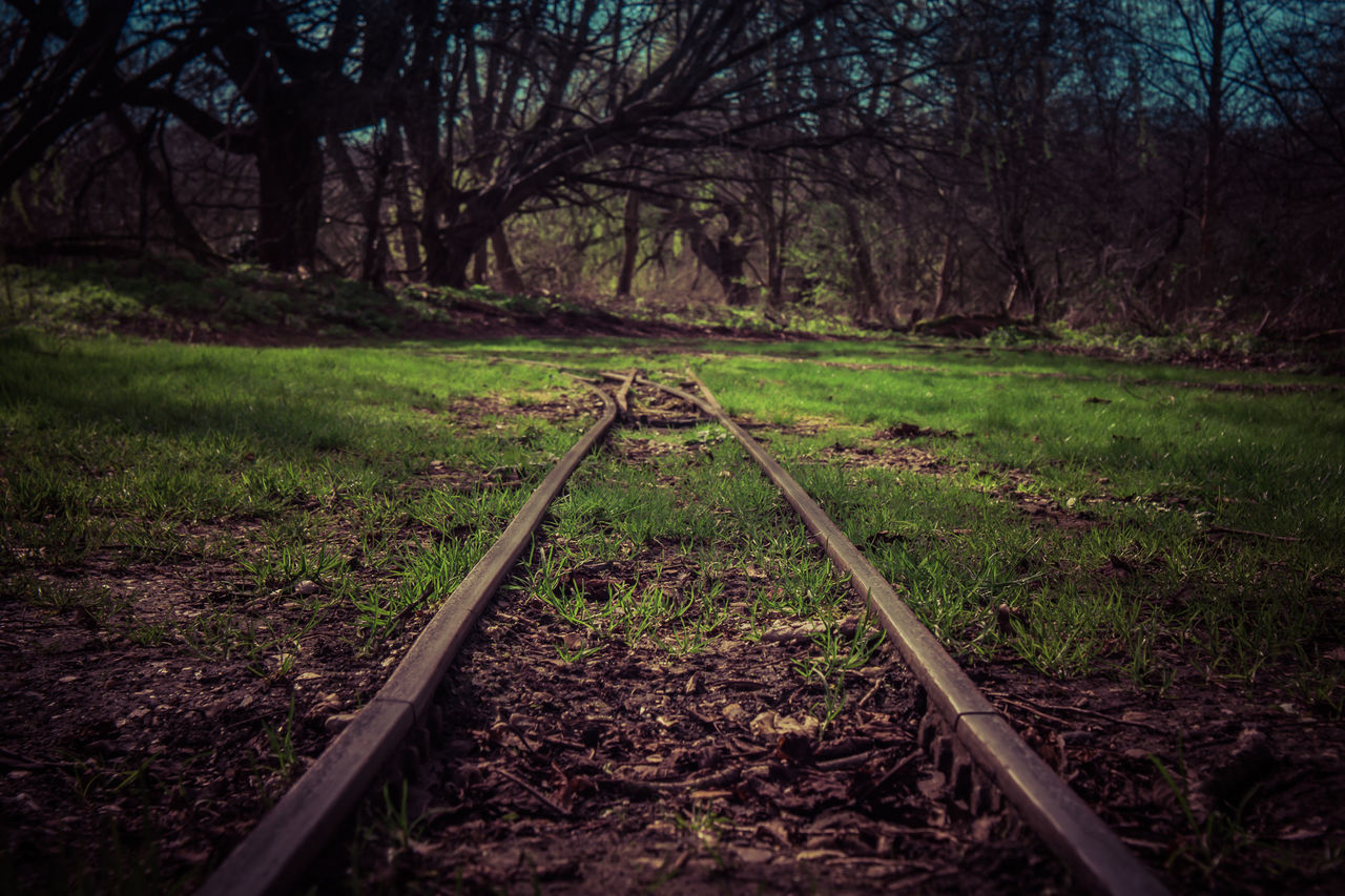 Beauty In Nature Day Grass Growth Landscape Nature No People Outdoors Railroad Track Spring Springtime Tranquility Tree