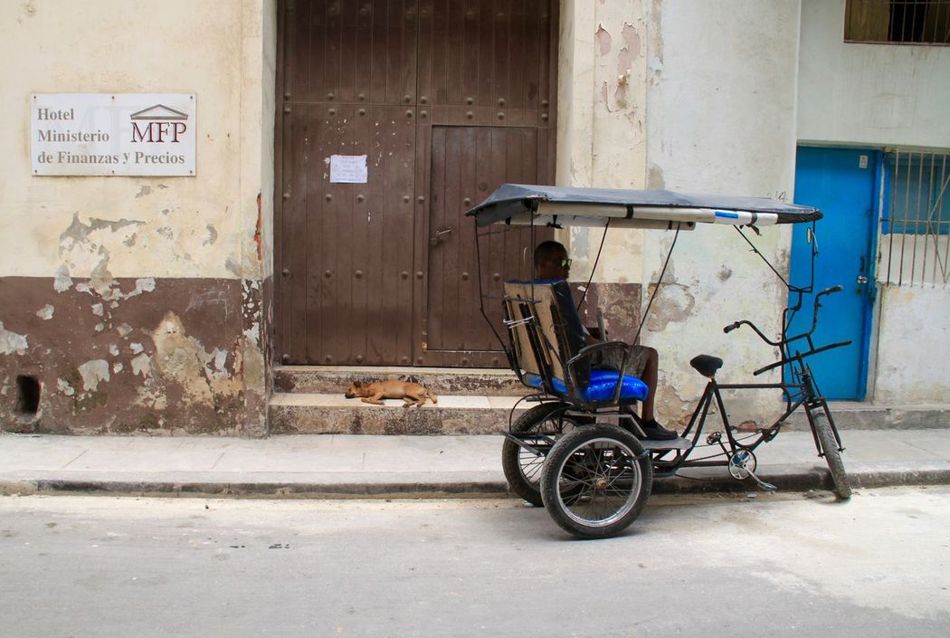 Cuba Havana Havanna, Cuba Pet Portraits Taxi Traveling Architecture Bicycle Building Exterior Built Structure Capital Cities  Cuban Life Dog El Prado Havana Street Land Vehicle Mode Of Transport No People Outdoors Paseo Del Prado Pet Rikshaw Stationary Transportation Travel Destinations Been There.