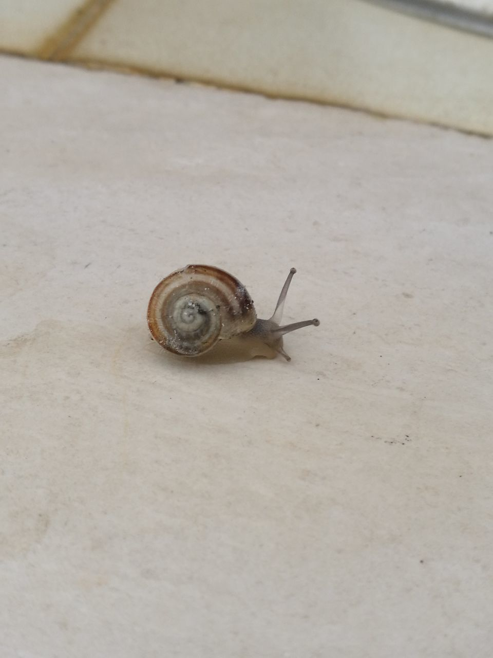 snail, one animal, animal themes, gastropod, wildlife, animals in the wild, fragility, close-up, nature, day, no people, outdoors