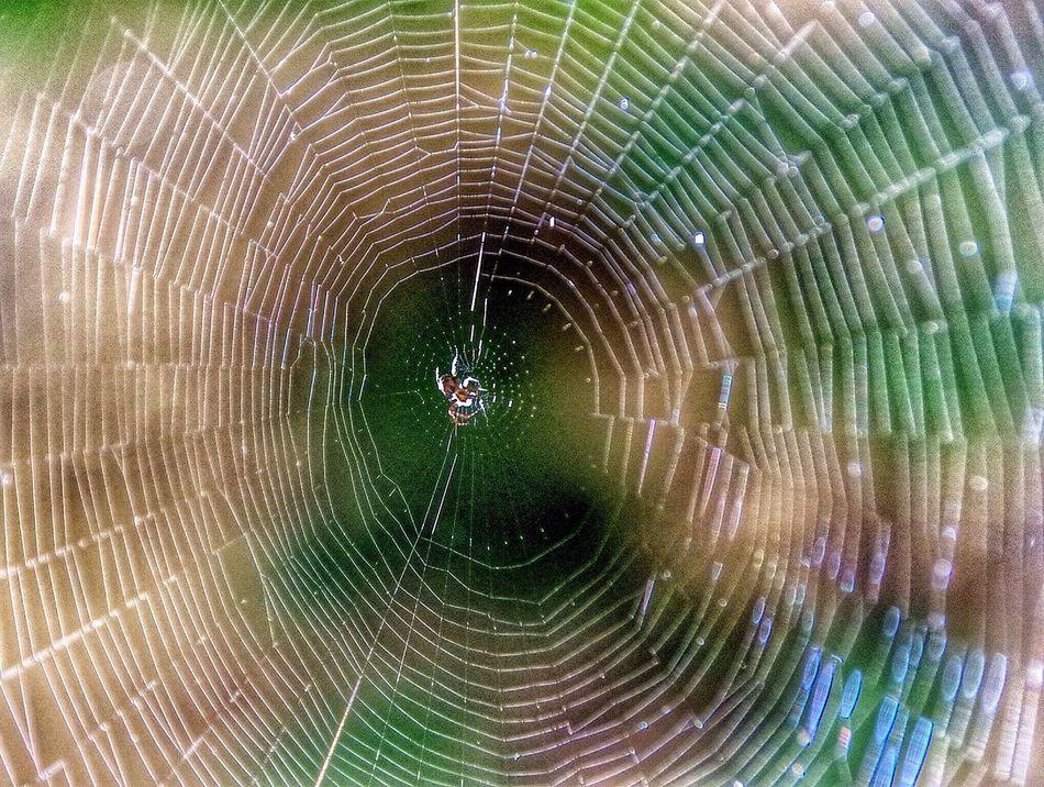 Beautiful stock photos of spider's, Alone, Animal, Animal Hair, Arachnophobia