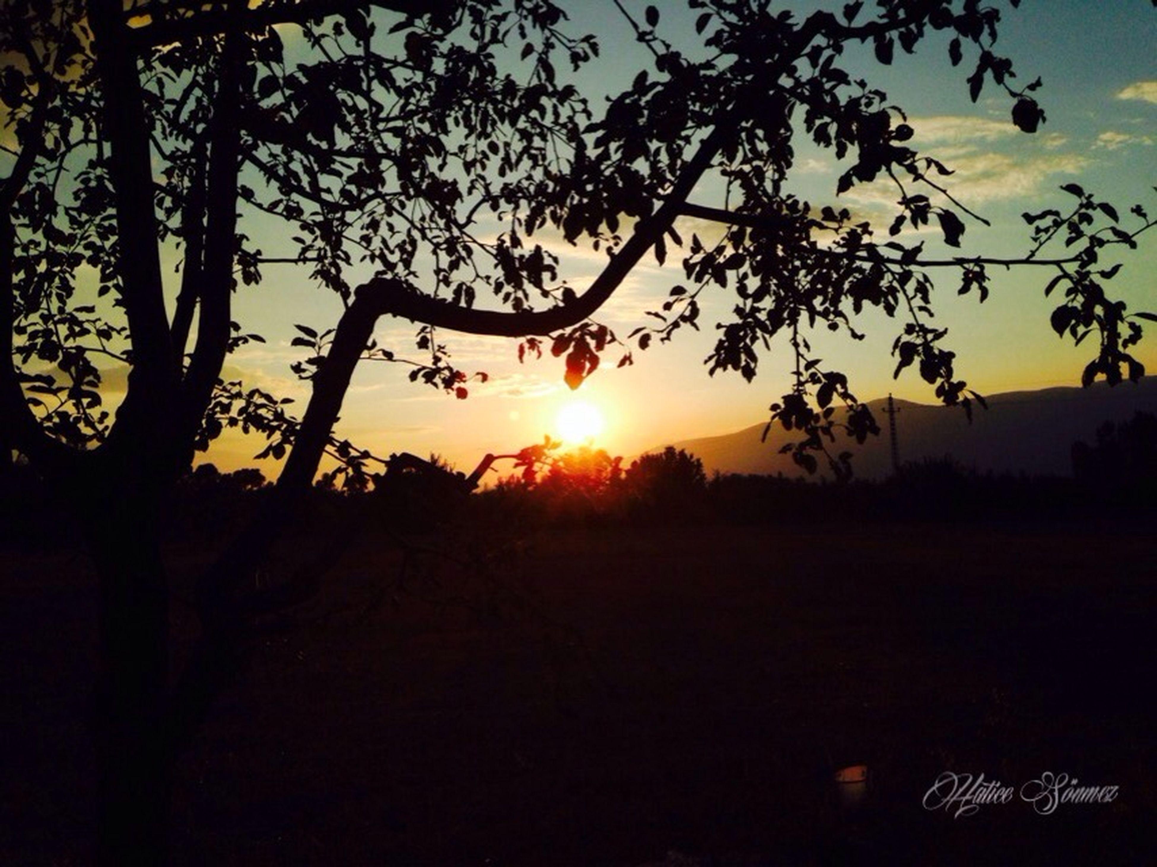 sunset, sun, silhouette, scenics, tranquil scene, tranquility, beauty in nature, landscape, orange color, sky, tree, sunlight, nature, sunbeam, idyllic, lens flare, back lit, field, branch, outdoors