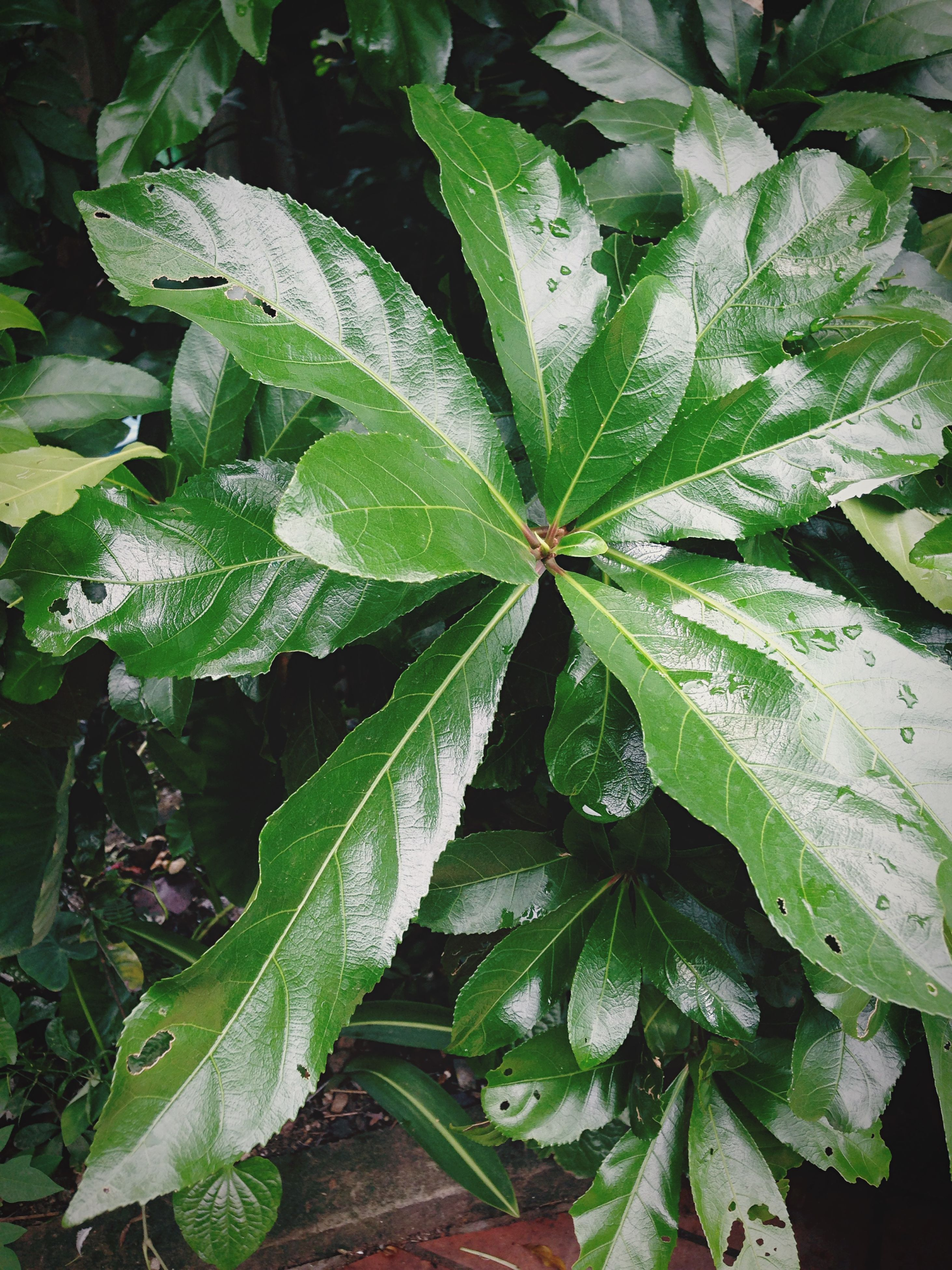 leaf, growth, green color, plant, freshness, nature, close-up, leaf vein, beauty in nature, leaves, wet, high angle view, drop, fragility, full frame, green, day, no people, backgrounds, outdoors