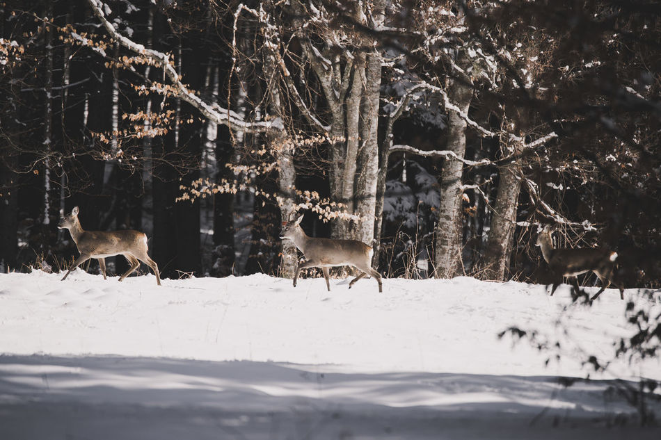 Animal Animal Head  Animal Themes Animal Wildlife Animals Animals In The Wild Branch Buck Cold Temperature Deer Deers Livestock Nature Nature Nature Photography Nature_collection No People Roe Deer Snow Tree Weather Wildlife Wildlife & Nature Winter