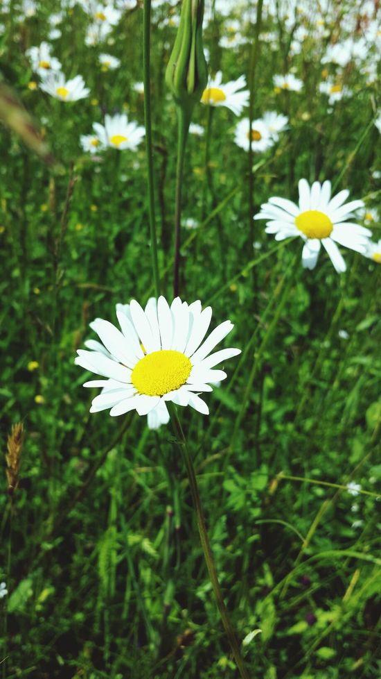 Flower Nature Summer
