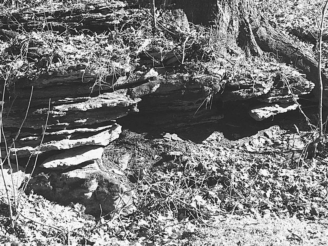 Light And Shadow Rock Formation Rocks Backroads Trees Nature_collection Countryside Light And Shadows Eyemnaturelover EyeEm Nature Lover Nature Mothernature Kentucky  Backroad Country Life Shadows Blackandwhite Fortheloveofblackandwhite