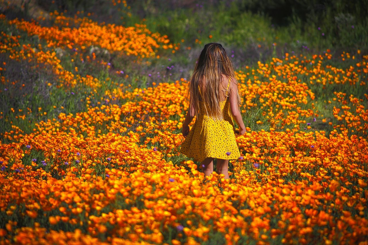 Fields Of Gold https://youtu.be/Dnj1zshmTE0 Poppy Field California Poppies Fields Of Gold Flower Beauty In Nature Outdoors Young Women Canon5Dmk3 Canonphotography Streamzoofamily California Dreaming EyeEm Best Shots - Nature Moodscapes California Love