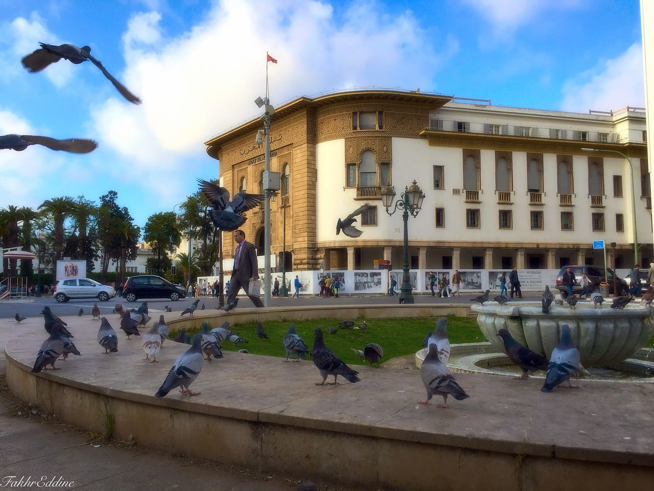 architecture, building exterior, built structure, animal themes, sky, real people, bird, transportation, large group of animals, day, animals in the wild, land vehicle, large group of people, outdoors, cloud - sky, car, animal wildlife, city, mammal, water, tree