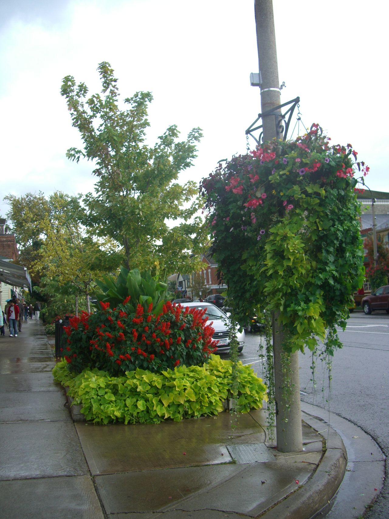 Street in Niagara on the Lake Beautifull Beauty In Nature Blooming Blossom Canada Cloudy Sky Composition Flowering Shrubs Flowers Footpath Fragility Freshness Growth Hanging Basket In Bloom Incidental People Niagara On The Lake Outdoor Photography Quaint  Street Tourism Tourist Attraction  Tourist Destination Tower Tree