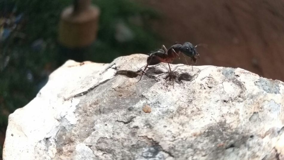 Close-up Textured  Focus On Foreground Rock Nature Rocky Zoology No People Tranquility Geology Ant Black Ant Black Ant On The Stone Night Nightphotography Night Lights Night Shot