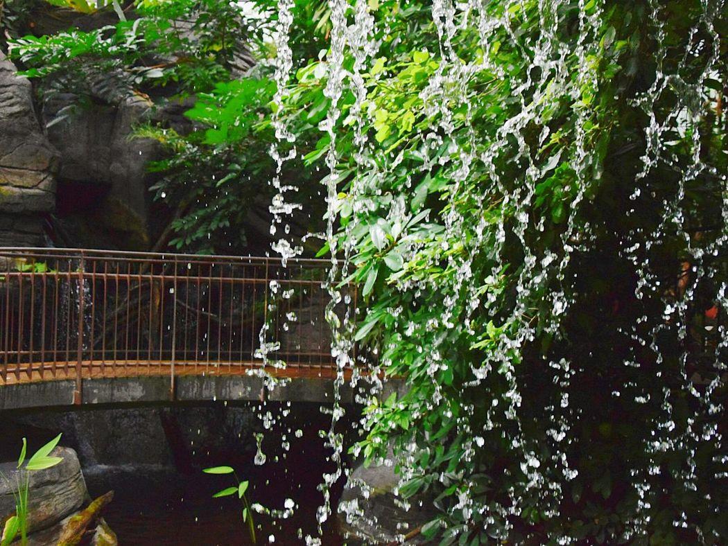 Waterfall Bridge Water Tropical Paradise Green Botanical Garden Umid