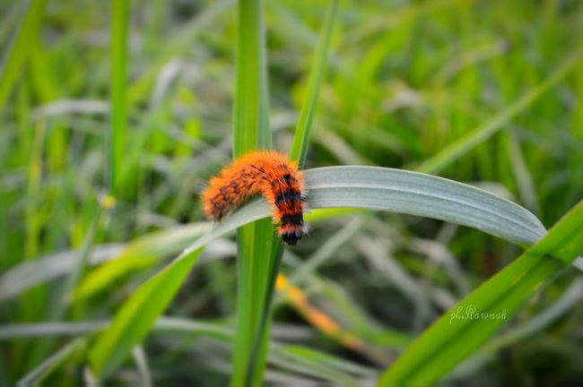 One Animal Animal Themes Insect Animals In The Wild Wildlife Close-up Focus On Foreground Stem Plant Grass Dragonfly Nature Green Color Zoology Growth Fragility Day Animal Wing No People Freshness Nature_collection Nature Taking Photos Beauty In Nature Green Leaf