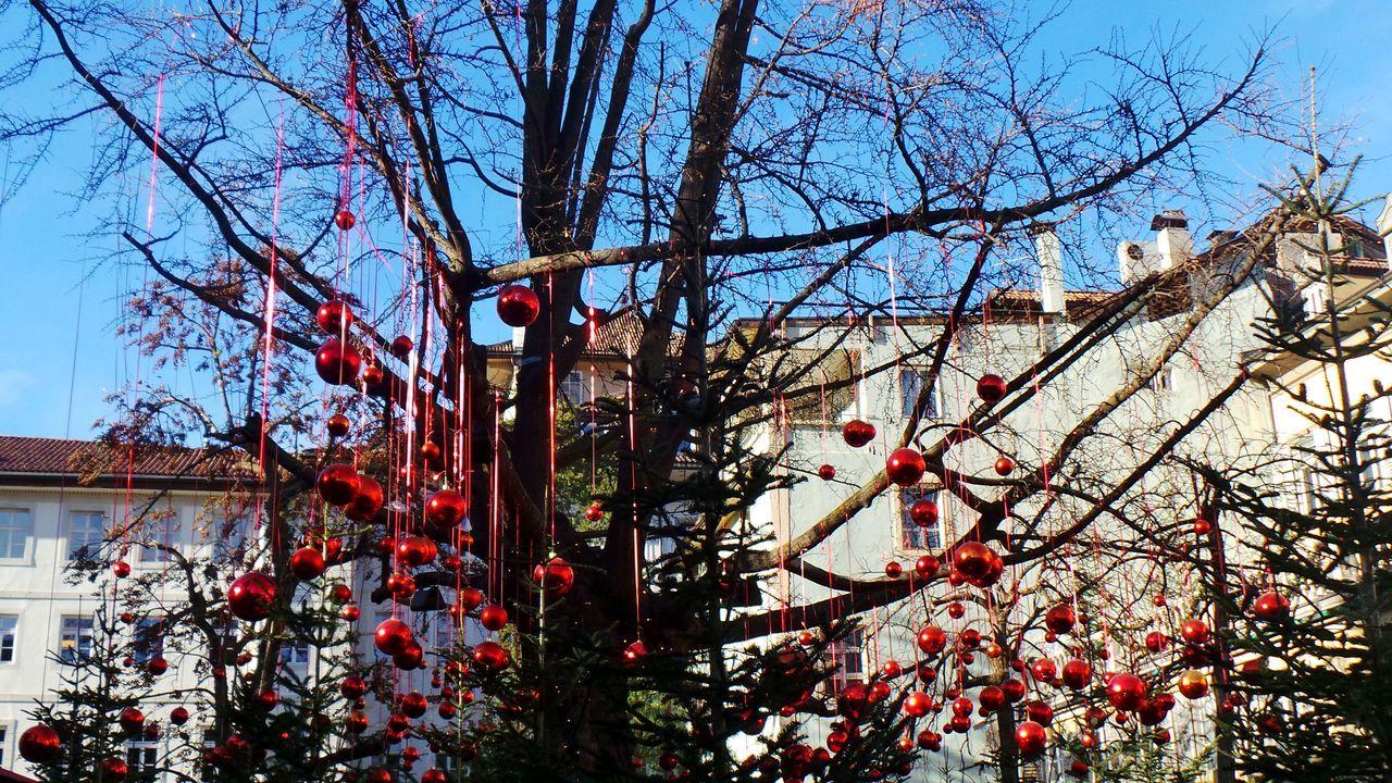 Bolzano Bolzano - Bozen Christmas Christmas Markets Showcase: December Winter The Culture Of The Holidays