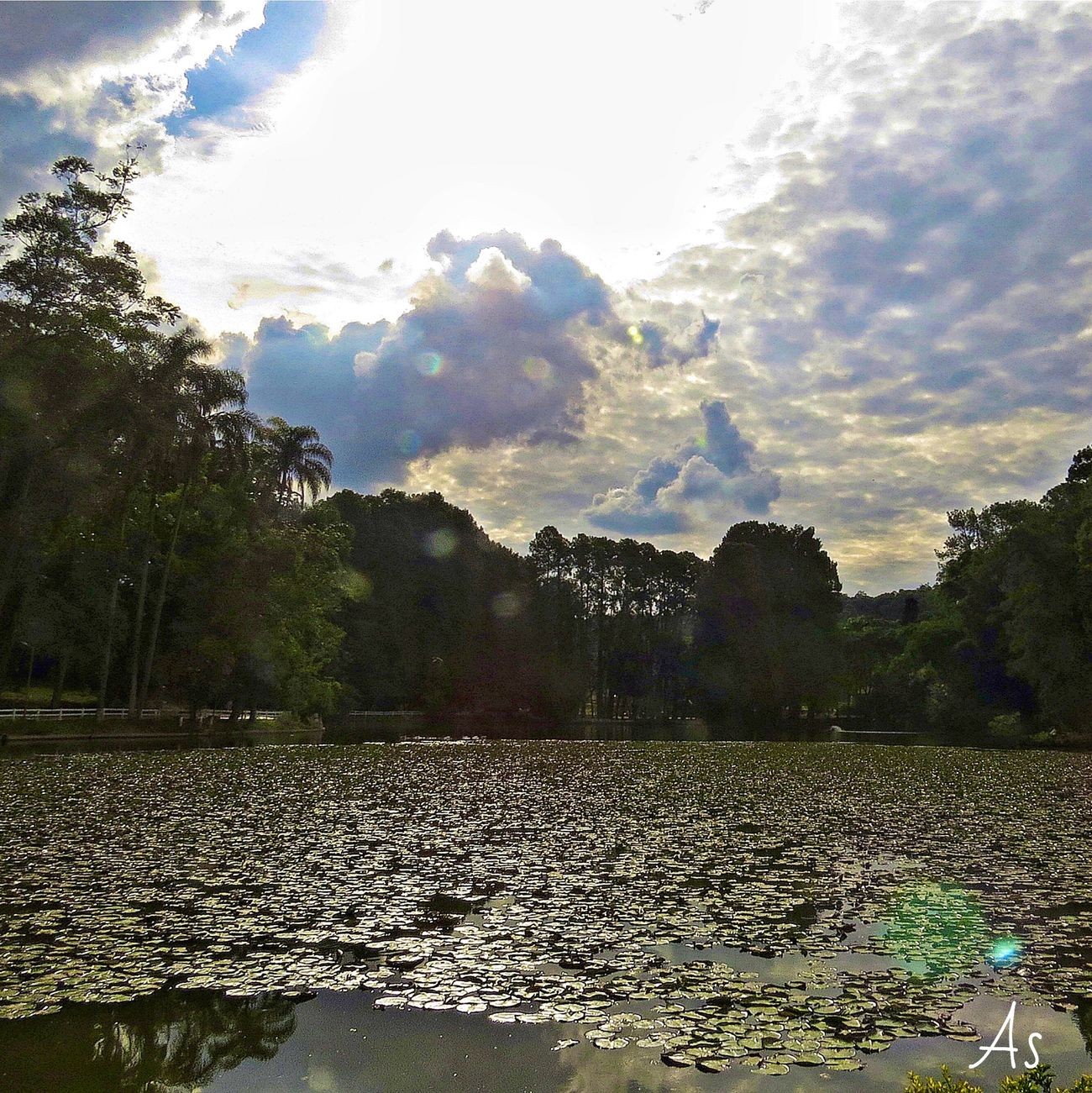 Horto Florestal - S. Paulo Tree Water Nature Sky Reflection Tranquility Scenics Beauty In Nature Outdoors Tranquil Scene Cloud - Sky Eye4photography  EyeEm Best Shots Reflection First Eyeem Photo Nature