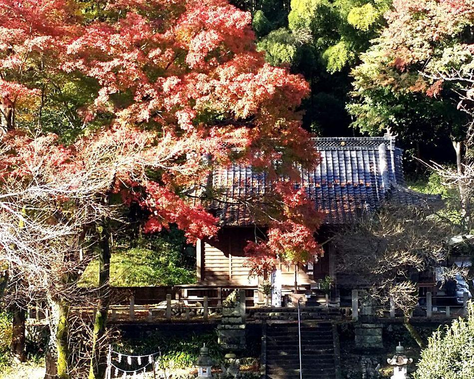 Autumncolours Takao Takao Japan near Tokyo Japannature Takaonature Takao Autumn Takaoautumn2016