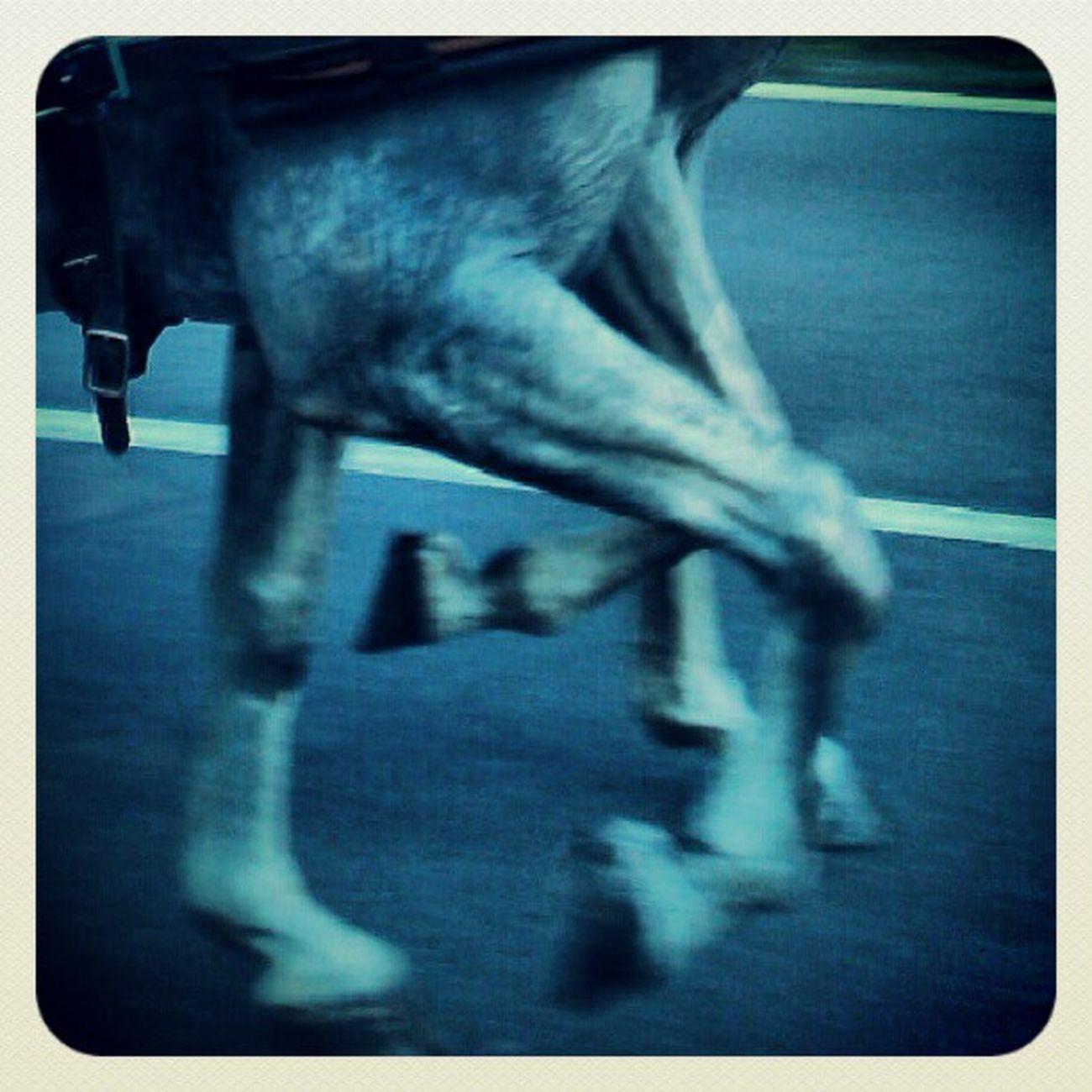 Instahorse Horsesofinstagram Horsestagram Welovedrivingsport Combineddriving Fahrsport Sportkörning Drivingsport Pony Yourdailyhorses Equestrian Carriagedriving Attelage
