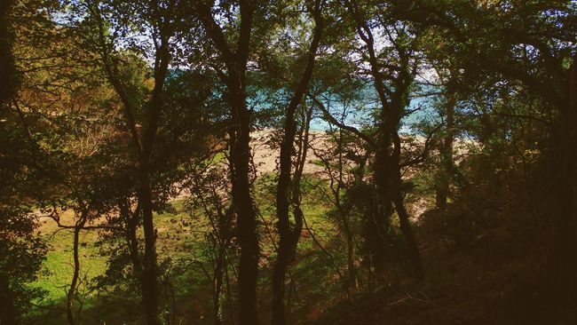 Forest&sea Tree Nature No People Backgrounds Beauty In Nature Green Color Outdoors Varna,Bulgaria Sea Blacksea 😊 Forest Beach
