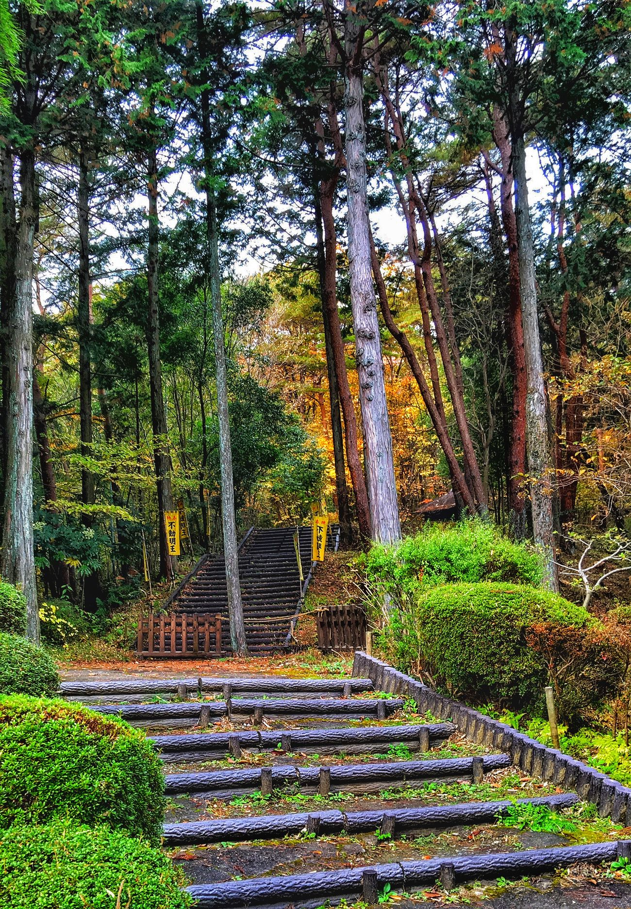 Taking Photos WonderfulJourney Japan Streamzoofamily TheVilleAtEyeem Beautiful Nature This Is My Paradise