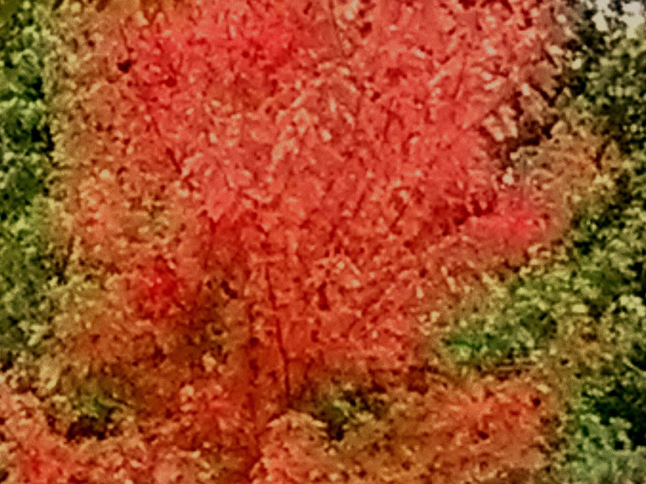 Nature Colors-A Gift From Above No People Close-up Red Pink Color Crushed Day
