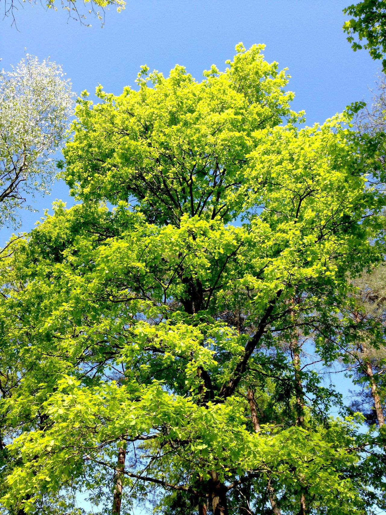 Trees Leaves Green Blue Sky Nature