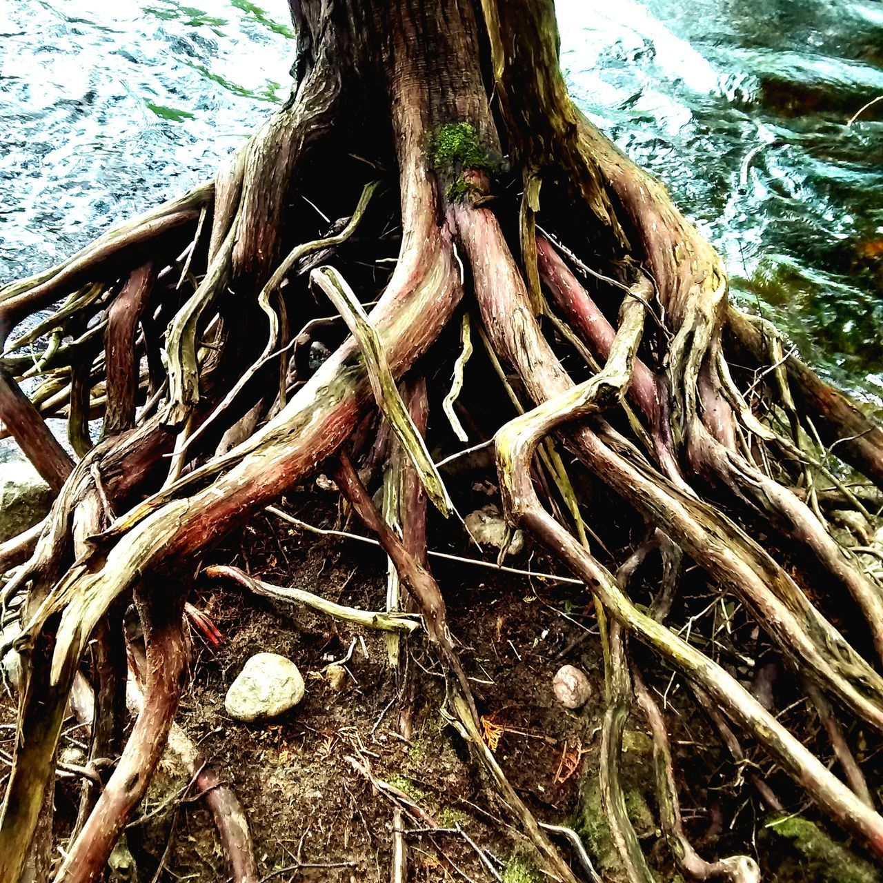 root, day, nature, tree, outdoors, no people, high angle view, water, tree trunk, close-up, branch