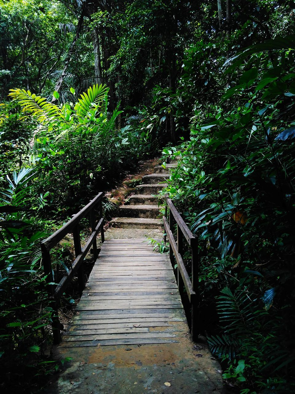 steps and staircases, railing, steps, the way forward, staircase, nature, growth, tree, tranquility, beauty in nature, stairs, tranquil scene, day, outdoors, footbridge, no people