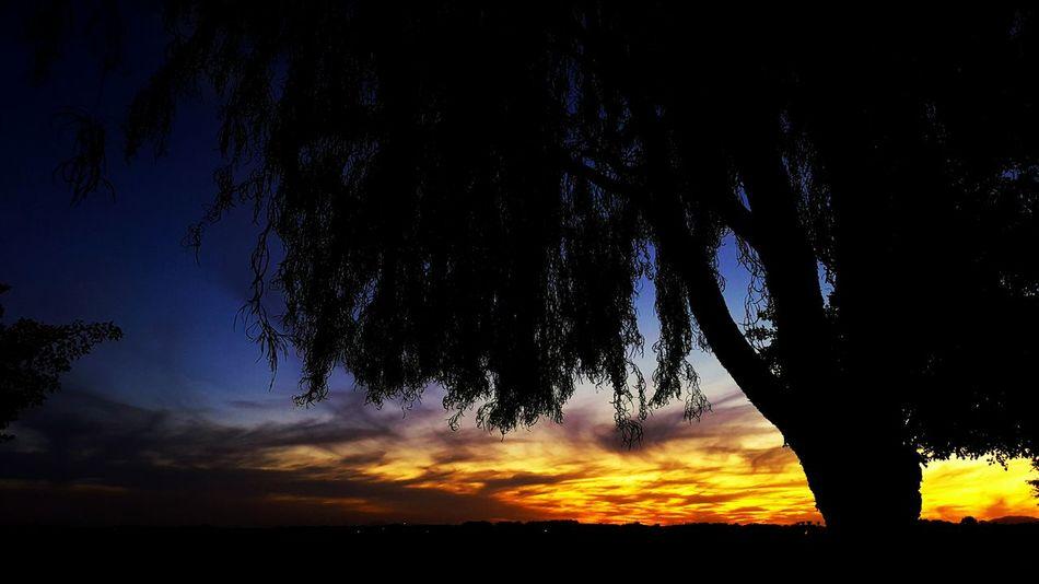Sunset in Gilbert, AZ Sunset Gilbert, Arizona Sunset #sun #clouds #skylovers #sky #nature #beautifulinnature #naturalbeauty #photography #landscape Sunsetporn