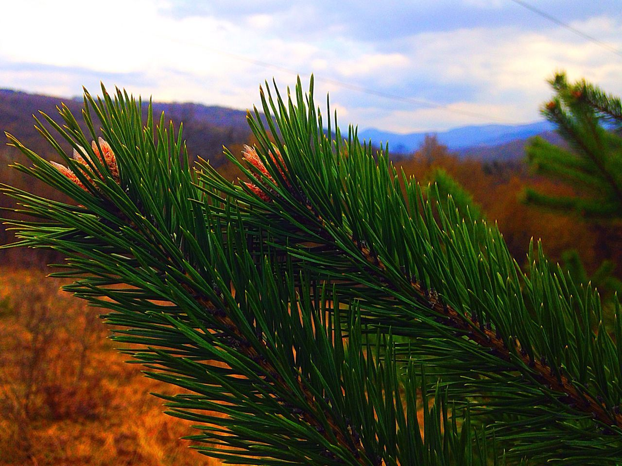 Spring❤️🌷 Pine Pineneedles Needles Nature Trees Mountain Mountain View Nature Makes Me Smile Smile MyPhotography IPhone5 Sun Spring Hiking Nature Lover Woods Green 28/100happydays