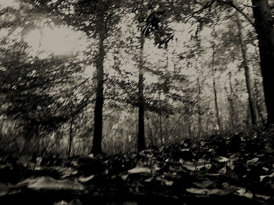 The Great Outdoors - 2016 EyeEm Awards Trees, Silouettes, Nature, Light And Dark, Shadows, Black And White Black And White Photography Leaves Eerie Scene Eerie Trees