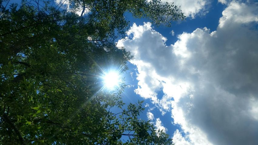 Just a simple shot at the right moment of the sun and clouds. Tree Forest Sky Nature Outdoors Cloud - Sky Low Angle View Day Blue Beauty In Nature No People Scenics Freshness