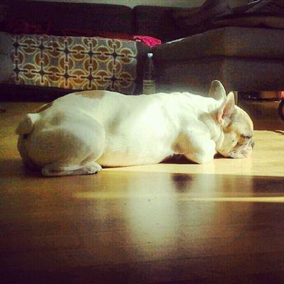 Moodofthemorning Morgen Frenchbulldog Bullstagram bully petstagram sunny